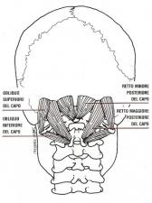 Suboccipitali