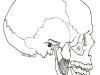 Pterigoideo interno